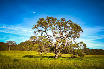 Photograph - Oak Tree Green Meadow Moon Rising by Connie Cooper-Edwards