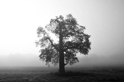 Photograph - Oak Tree In Fog Monochrome by Marek Stepan