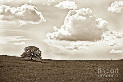 Photograph - Oak Tree In Sepia Tone by Jim And Emily Bush