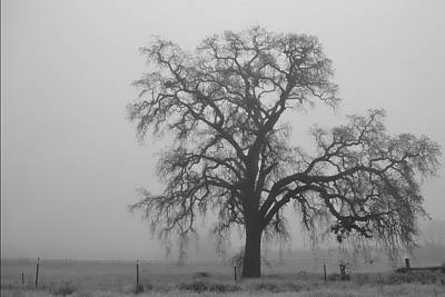 Uc Davis Photograph - My Beloved Gray Central Valley by Alessandra RC