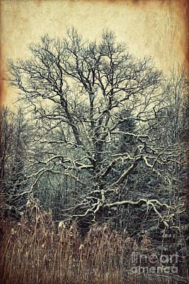 Mighty Oak Photograph - Oak Tree In Winter by Jutta Maria Pusl