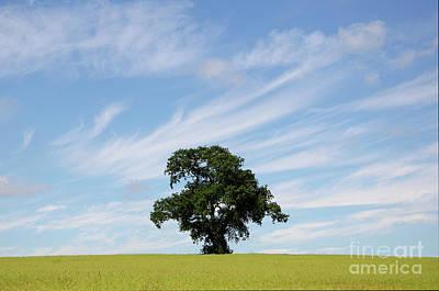 Oak Tree Landscape Art Print by Steev Stamford