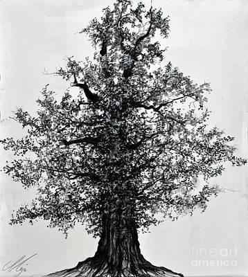 Drawing - Oak Tree by Maja Sokolowska