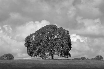 Oak Tree On Hill Art Print