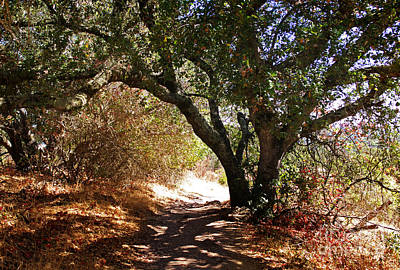 Poison Photograph - Oak Tree On Sylvan Trail by Laura Iverson
