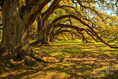 Photograph - Oak Tree Rip Curl by Adam Jewell