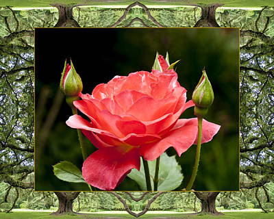 Spiritual. Geometric Photograph - Oak Tree Rose by Bell And Todd