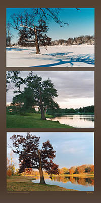 Photograph - Oak Tree Through Seasons by Peg Toliver