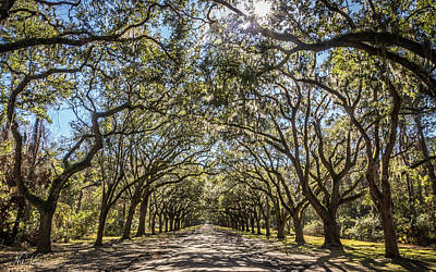 Photograph - Oak Tree Tunnel #3 by Framing Places