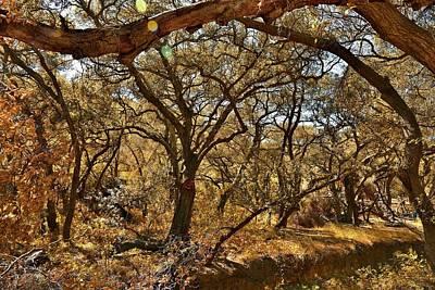 Kids Alphabet - Oak Trees Along Live Oak Canyon Road III - Autumn Colors by Linda Brody