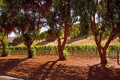 Photograph - Oak Trees And Vines by Gary Brandes