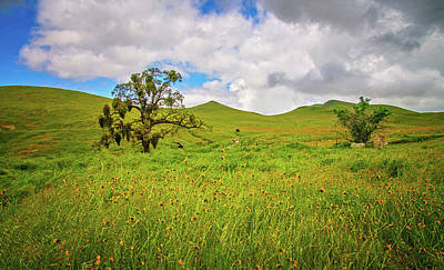 Photograph - Oak Trees And Wildflowers by Lynn Bauer