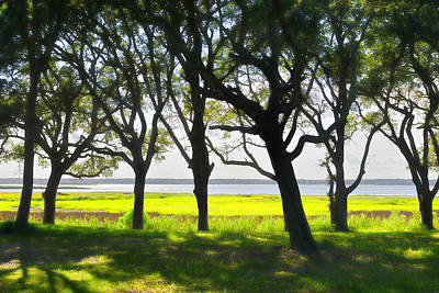 Photograph - Oak Trees - Fort Fisher Nc by Dana Sohr