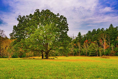 Photograph - Oak Trees In Clearing by Steven Ainsworth