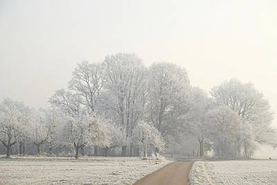 Photograph - Oak Trees In Hoar Frost by Martin Stankewitz