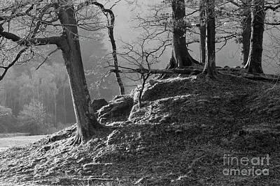 Mighty Oak Photograph - Oak Trees In Monochrome by Tony Higginson