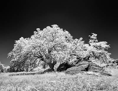 Ir Photograph - Oak With Boulder II by Joseph Smith