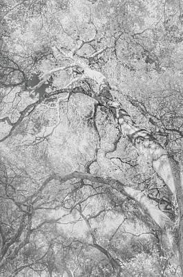 Oaken Cluster Art Print