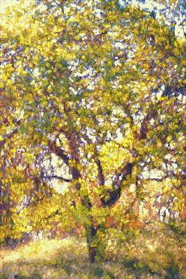 Photograph - Oaks 29 by Pamela Cooper
