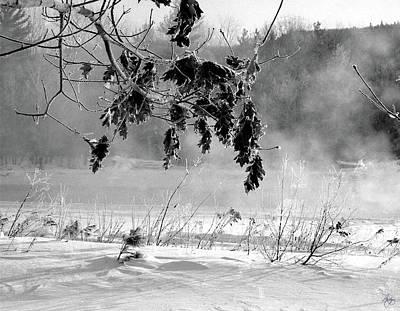 Photograph - Oaks Along The Pemigewasset River by Wayne King