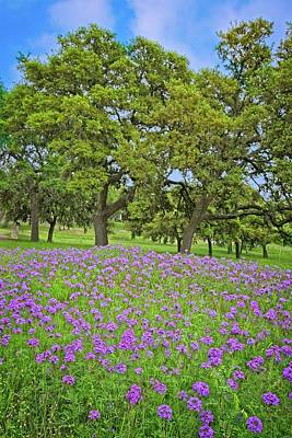Photograph - Oaks And Wildflowers by Lynn Bauer