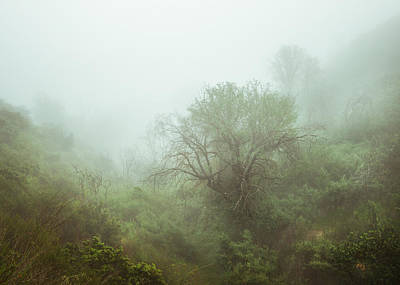 Photograph - Oaks In Foggy Ravine by Alexander Kunz