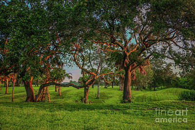 Photograph - Oaks In Morning Light by Tom Claud