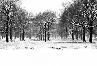Photograph - Oaks In Winter  by Marek Stepan