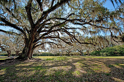 Avery Island Photograph - Oaks Of Avery Island by Bonnie Barry