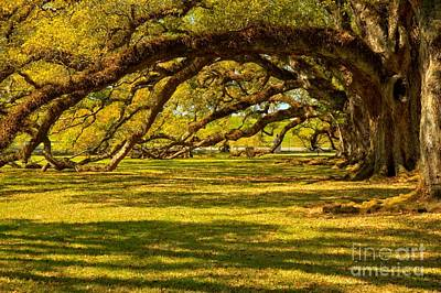 Photograph - Oaks Over The Grounds by Adam Jewell