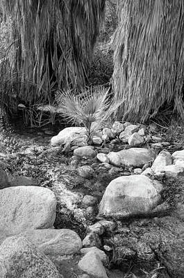 Photograph - Oasis Fern by Frank DiMarco