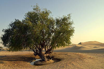 Photograph - Oasis In Desert by Alexandre Rotenberg