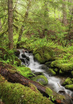 Photograph - Oasis In The Forest by Angie Vogel
