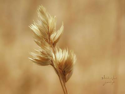 Photograph - Oat Grass by Jamie Johnson