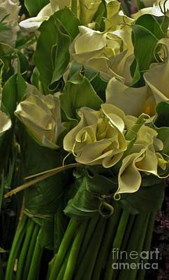 Oaxacan Calla Lilies Original by Jon Cretarolo