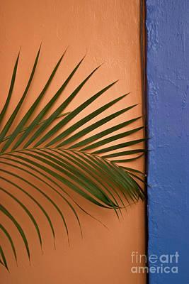 Oaxacan Palm Original by Jon Cretarolo