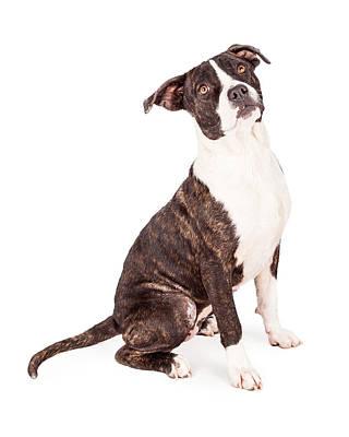 Obedient Terrier Mixed Breed Dog Print by Susan Schmitz