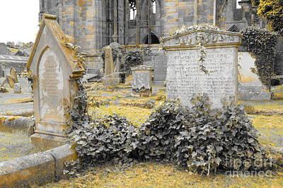 Oblivion. Ivy And Golden Lichen Art Print