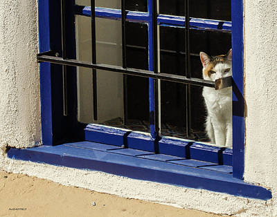 Photograph - Observant Kitty In Window by Allen Sheffield