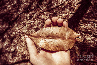 Frail Photograph - Observation In Human Nature by Jorgo Photography - Wall Art Gallery