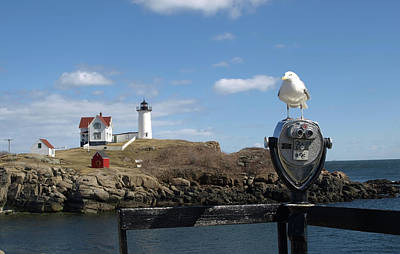 Photograph - Observatory Seagull And Nubble Lighthouse by Mary Capriole