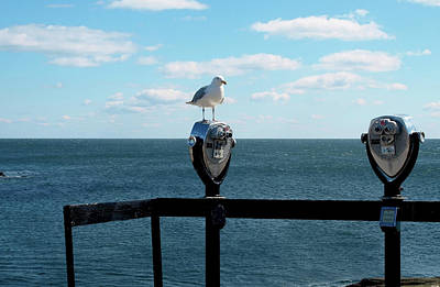 Photograph - Observatory Seagull by Mary Capriole
