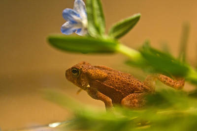 Photograph - Observing Toad by Douglas Barnett