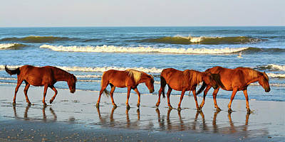 Photograph - Obx Wild Horses by Don Mercer