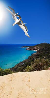 Beautiful Birds Photograph - Ocean Breeze by Jorgo Photography - Wall Art Gallery