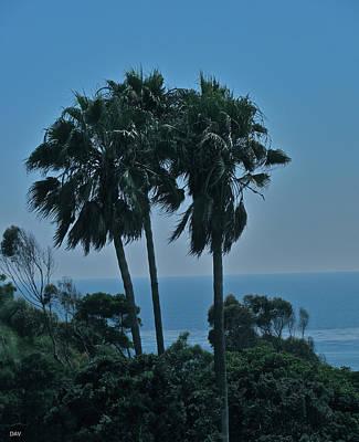 Ocean Brezze Palms Art Print by Debra     Vatalaro
