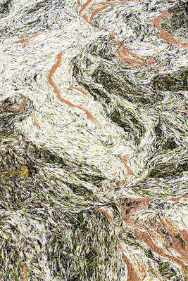 Photograph - Ocean Debris Abstract by Bob Slitzan