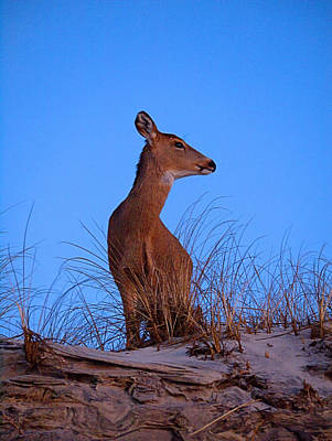 Photograph - Ocean Deer I I by  Newwwman