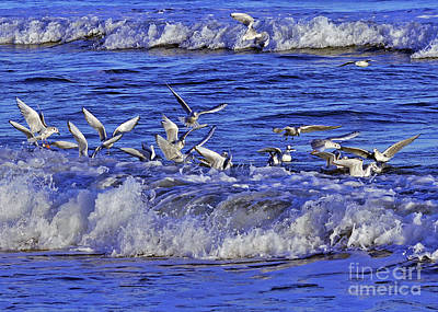 Photograph - Ocean Delight 2 by Lydia Holly