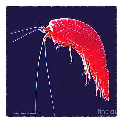 Photograph - Ocean Fantasy - Amphipod by Art MacKay